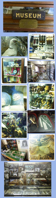museum-web.jpg